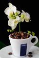 šálek na espresso Lavazza a orchidej II