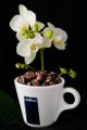 šálek na espresso Lavazza a orchidej III