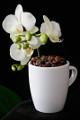 šálek na espresso Jura a orchidej IV