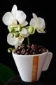 šálek na espresso Corsini a orchidej V
