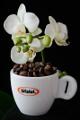 šálek na espresso Bristot a orchidej VI