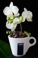 šálek na espresso Lavazza a orchidej VII