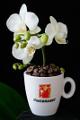 šálek na espresso Hausbrandt a orchidej VIII