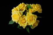 žluté růže IV