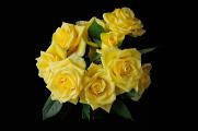 žluté růže V