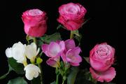 kytice růží s frézií I