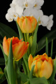 oranžové tulipány s orchideí V