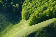 Monti Sibillini - les na svahu I