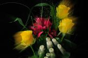 kytice růží IV