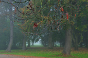 ranní mlha ve Stromovce I