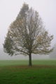 ranní mlha ve Stromovce II