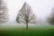 ranní mlha ve Stromovce III