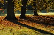 podzimní barvy ve Stromovce I