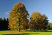podzimní barvy ve Stromovce II