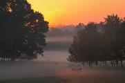 ráno na pastvě I