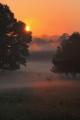 ráno na pastvě II