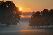 ráno na pastvě III