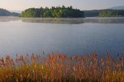 rybník Žár V