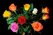 kytice růží VI