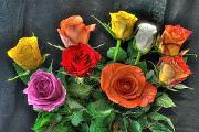 kytice růží VII