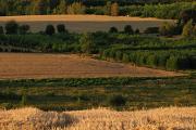 letní večerní krajina
