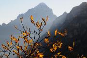 podzimní listy a Monte Agner