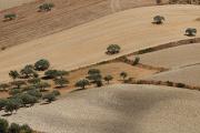 Monti Iblei - krajina II