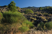 Etna - zarůstající lávové pole