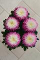 chrysantémy V