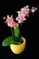 orchidej I