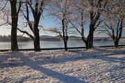 zimní krajina u rybníku Žár I