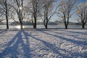 zimní krajina u rybníku Žár IV