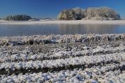 zimní krajina u rybníku Žár VIII