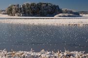 zimní krajina u rybníku Žár IX