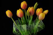 oranžové tulipány VI