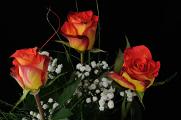 kytice růží V