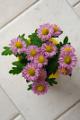 chrysantéma II