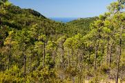 Bonassola - pobřežní les