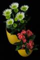 pryšec a chryzantémy