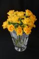 žluté růže II