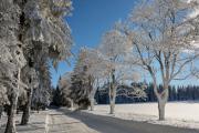 zimní stromořadí I