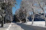 zimní stromořadí II