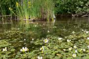 Cep - flowering shore II