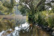 Hněvkovická přehrada - strom