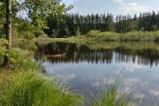 Mlýnský rybník II
