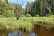 Mlýnský rybník IV
