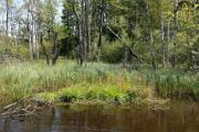 Mlýnský rybník VI