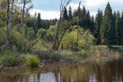 Mlýnský rybník VIII