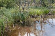Mlýnský rybník X