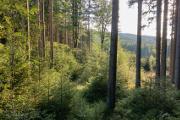 večerní les u Lukova I